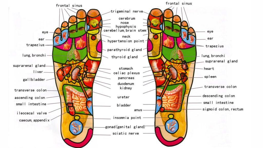 Reflexology foot massage chart