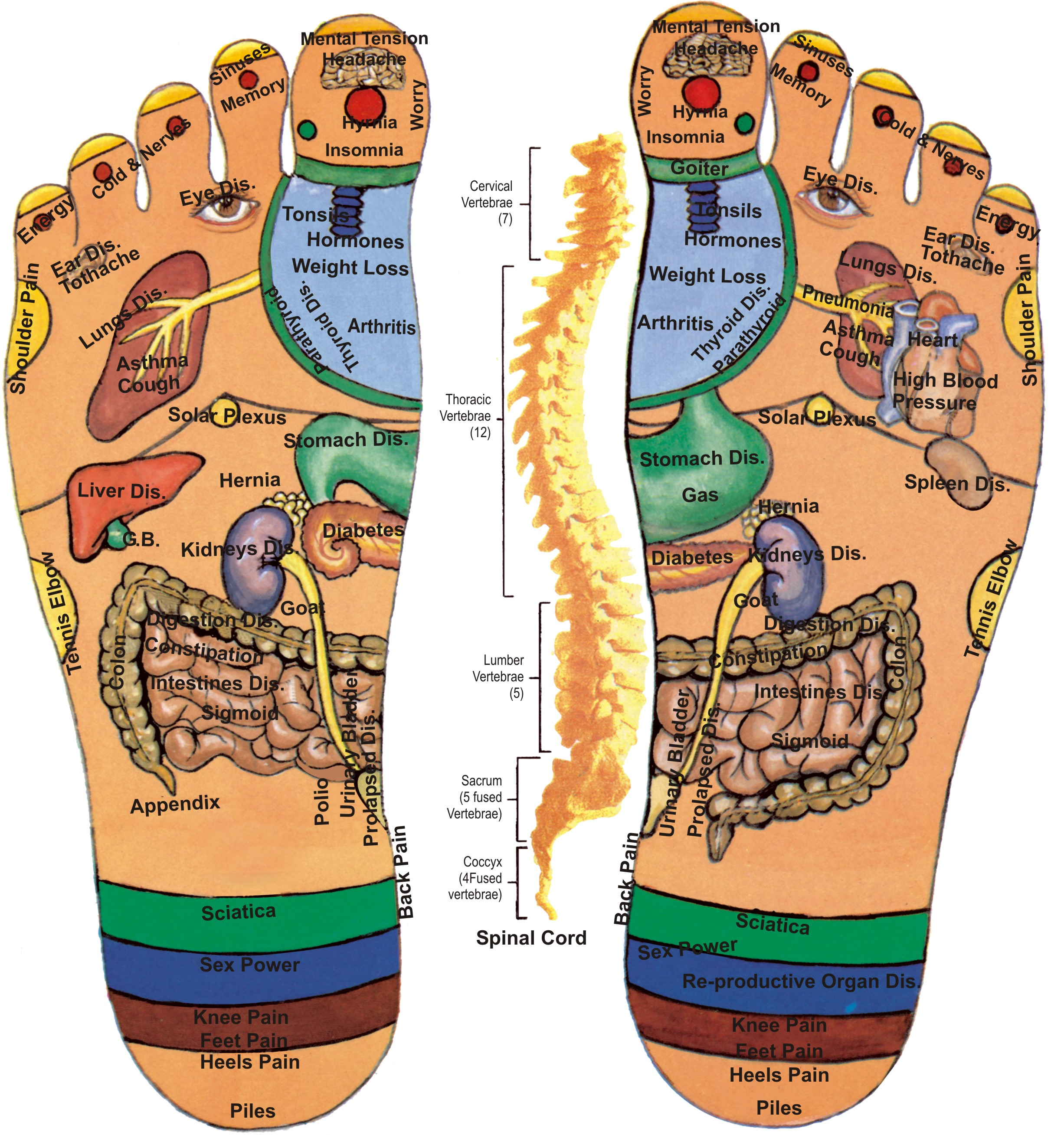 Foot Reflexology Pressure Points For Common Ailments