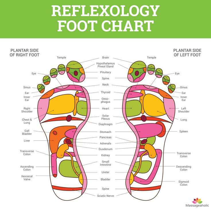 Foot Reflexology Chart Massageaholic